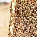Coaching Session: Beekeeping Coaching
