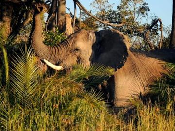 Offering with online payment: 5-Day Big 5 Kidepo Safari