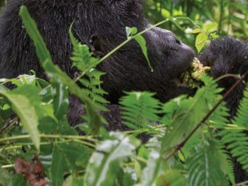 Offering with online payment: 4-Day Rwanda Safari