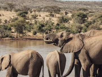 Offering with online payment: 8-Day Kenya's Hidden Treasures Luxury Safari by Far