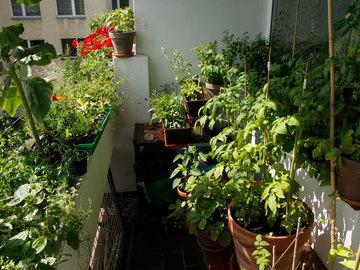 Workshop Angebot (Termine): Permakultur auf dem Balkon