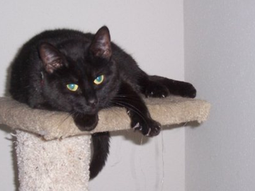 Pet Sitter: Experienced cat caretaker