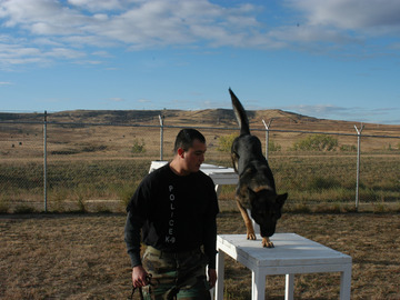 Angebot: Film Consulting for Military Working Dogs from Army K-9 Handler
