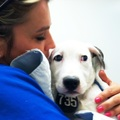Pet Sitter: Experienced Vet Tech and Animal Lover