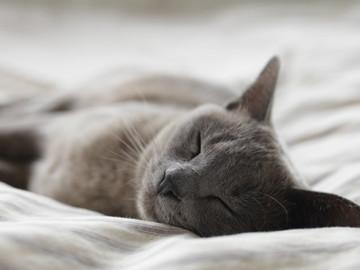 Urlaubsbetreuung: Katzenbetreuung bei mir (Ganztags)