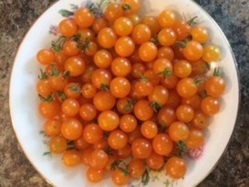 pay online or by mail: Gold Rush Currant Tomato