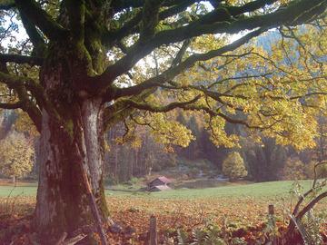 Workshop Angebot (Termine): Wald - Die andere Begegnung mit Sam Hess