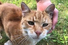 Dienstleistung: Hausbesuche für Katzen