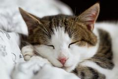 Dienstleistung: Liebevolles Tiersitting Graz