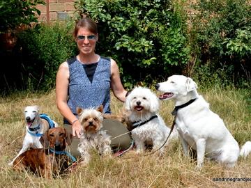 Offre: Education canine / promenades / Gardes