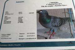 Vente avec paiement en ligne: Vend pigeon mâle fils de trésor 1er national Pau 2013 de chez Phi