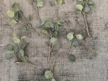 Ilmoitus: 2-3 kpl Ikean eukalyptusoksaa palasina