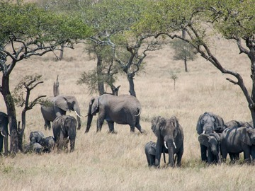 Offering with online payment: 5 Days Tanzania Mid-range Group-Joining Safari