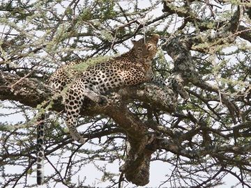 Offering with online payment: 4-Days Explore Ngorongoro crater & Tarangire