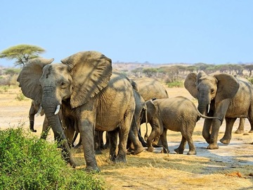 Offering with online payment: Day Trip Tarangire National park