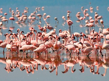Offering with online payment: Day Trip Lake Manyara National Park