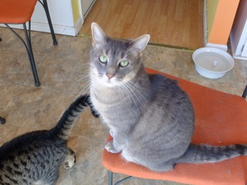 Available: Oliver & Timothy