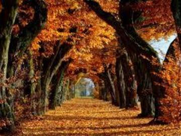 Selling: Autumn Equinox reading Special AUDIO