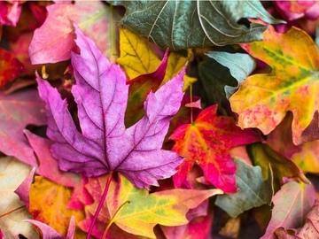 Selling: Autumn equinox reading. Seasons change.