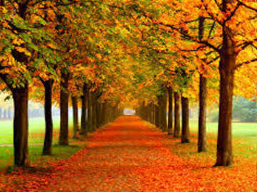 Selling: Will your love fall like the autumn leaves