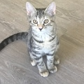 Available: Luna
