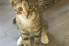 Available: Lily