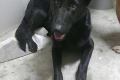 Available: Blackie