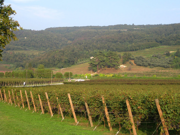 Offering with online payment: VALPOLICELLA, bike tour