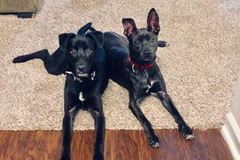 Available: Riley & Tarzan