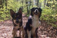 Urlaubsbetreuung: Urlaubsbetreuung Hunde Graz & Weiz-Gleisdorf