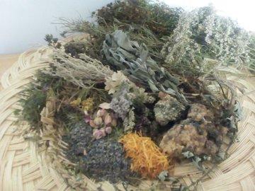 Workshop Angebot (Termine): Pflanzenzyklus Winter