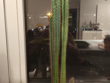 Exchange: Cactus standard