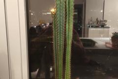 Echange: Cactus standard