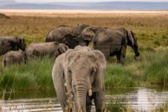 Réserver (avec paiement en ligne): Kilimandjaro - route Lemosho et safari - Tanzanie