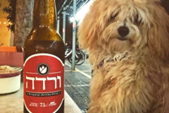 Discover: Varda (Rose) Beer