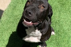 Available: Xena