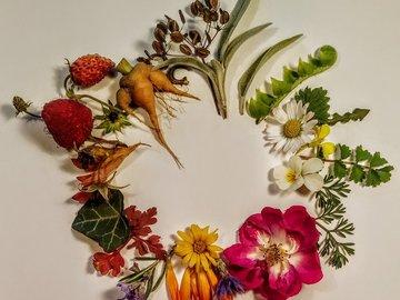 Workshop Angebot (Termine): Pflanzenzyklus - Botanik Grundkurs
