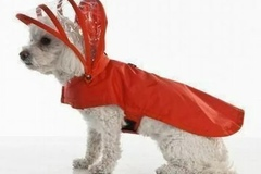 Buy Now: Red Vinyl Dog Rain Coat wholesale lots bulk