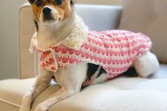 : Baozi Dog Jacket