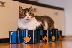 Dienstleistung: Alles für die Katz! - 30 min Betreuung in Graz
