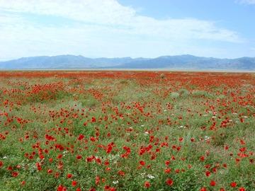 Réserver (avec paiement en ligne): Découverte de l'oasis de Temour - Ouzbékistan