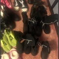 Buy Now: Lot of kids shoes