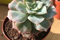 Vente: Lot de 4 succulentes