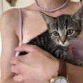 Urlaubsbetreuung: Katzen-Urlaubsbetreuung