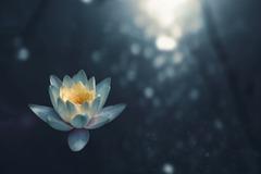 2.5 Credits : Transcendental Meditation