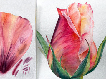 Workshop Angebot (Termine): Blumen malen mit Aquarell, Rosenknospe