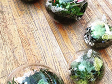 13 Credits: Tiny Worlds: Succulent and Moss Terrariums