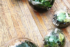 7.5 Credits: Tiny Worlds: Succulent and Moss Terrariums