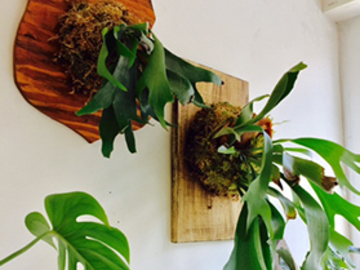 17.5 Credits: Staghorn Fern Wall Art