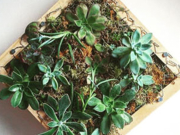 Events priced per-person: Succulent Wall Gardens